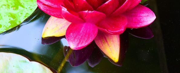 long lotus